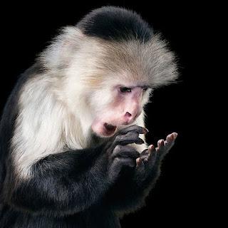 Mono con expresión humana