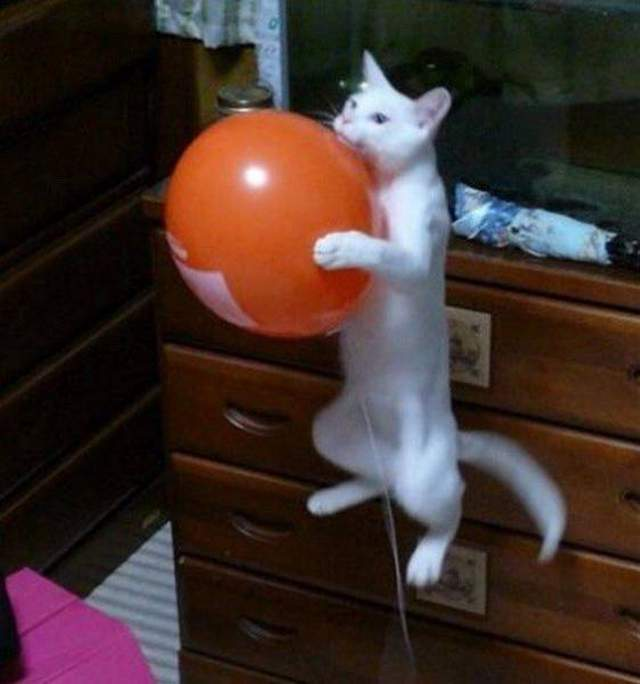 Funny cats - part 248, cute cat and kitten pictures, funny cat photos