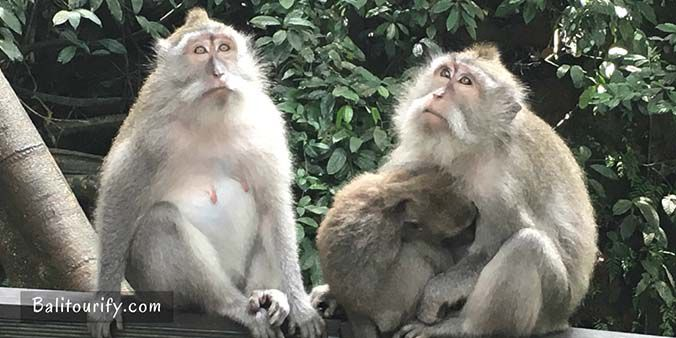 Ubud Monkey Forest, Full Day Ubud and Tanah Lot Temple Tour and see the Sunset