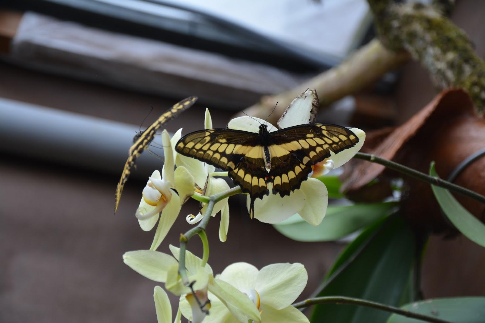 razstava-orhidej-metuljev-vrtni-center-kurbus