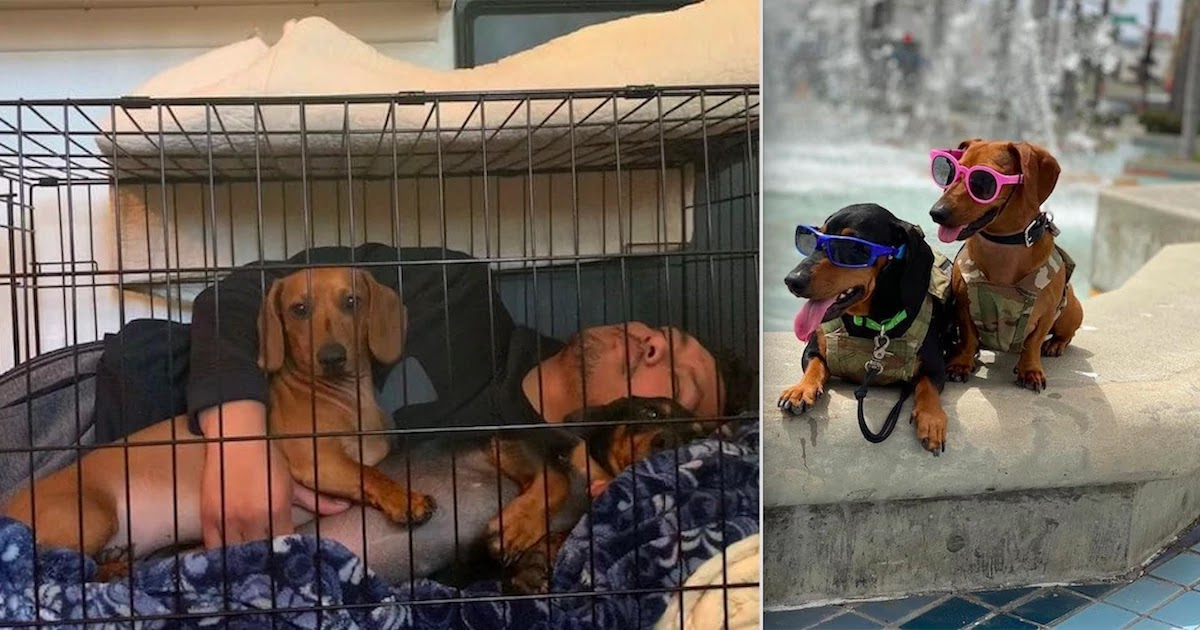 These Dogs Are Delivering Parcels For FedEx – Look At How Happy They Are To Be Helping!