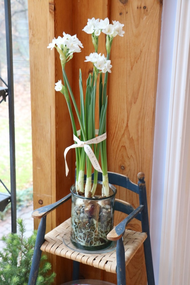 Christmas Kitchen Sunspace with Blooming Paperwhites
