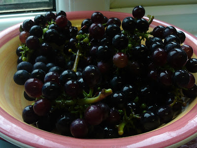 Harvest of Grow Your Own Grapes Green Fingered Blog