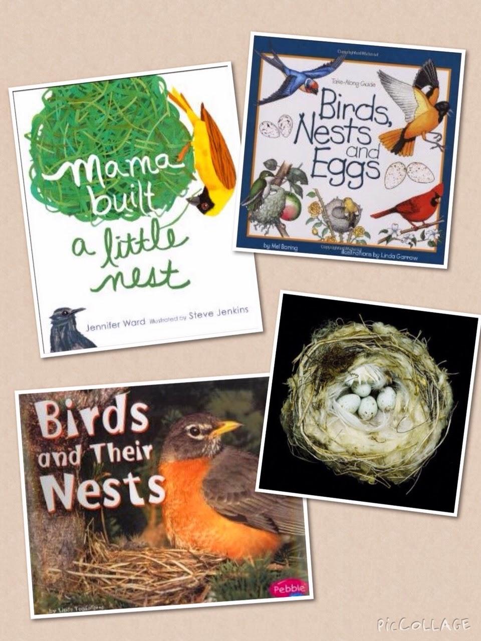Wonders In Kindergarten How Do Birds Make Nests