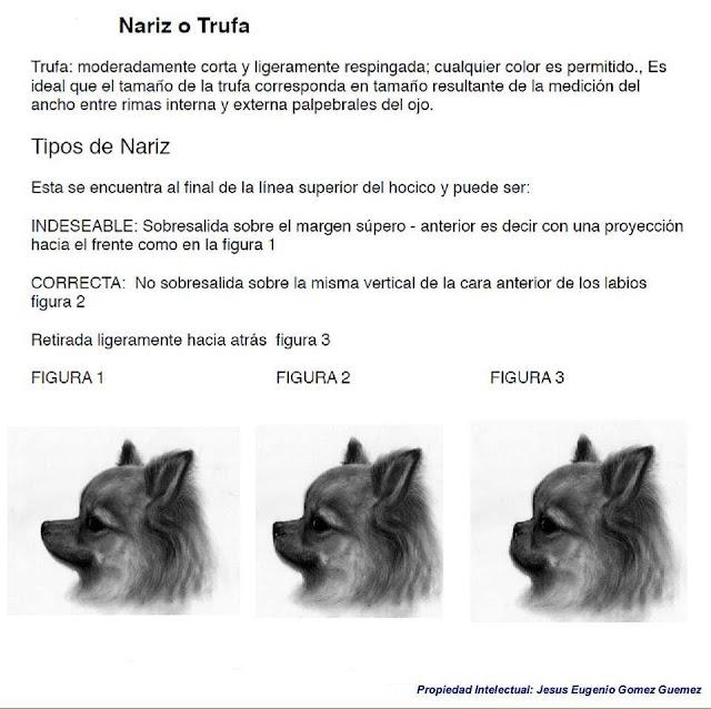 Estandar nariz del chihuahua