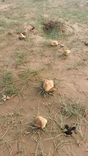 الفطر البري  في الصحراء والبراري العربية