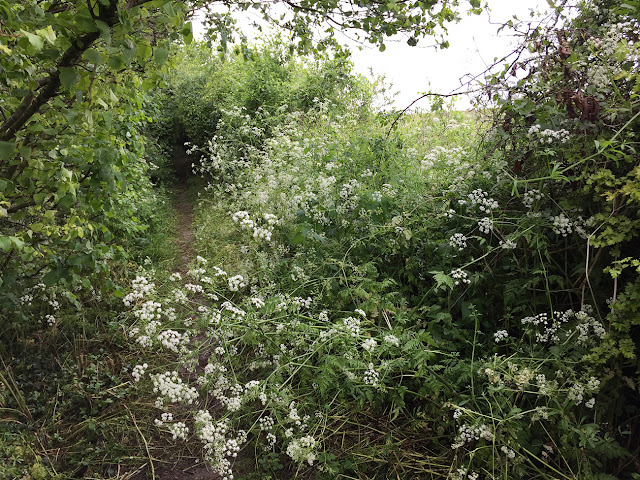 Path to Nash.  From Jackass Lane to Fortune Bank Farm.  2 June 2016.
