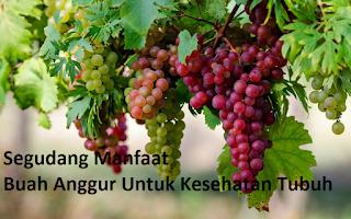 http://infoprodukgreenworld.blogspot.com/2016/06/manfaat-buah-anggur-untuk-kesehatan.html