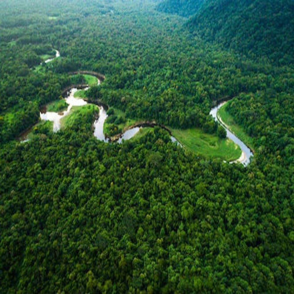 nachat-trevel-blog-amazonskie-dzhungli
