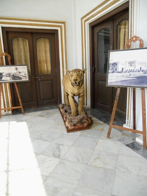 Things to see in Hyderabad India: stuffed tiger at Chowmahalla Palace