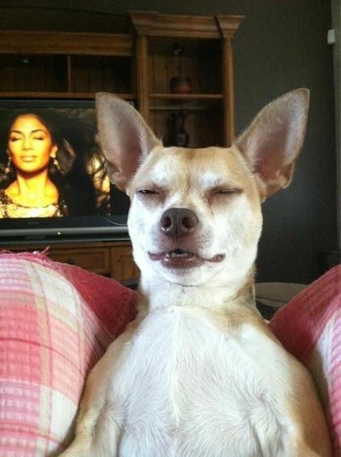 """Chết cười với bộ ảnh chó… """"hangover"""""""