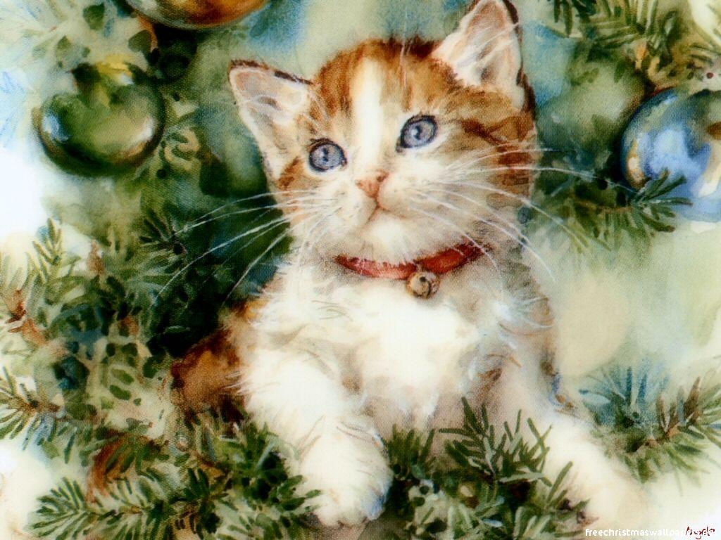 326e11898 شـــــيـــــرازى: تربية القط الشيرازى من الألف للياء