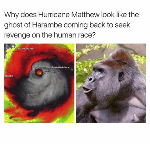 Hurricane Matthew - Harambe
