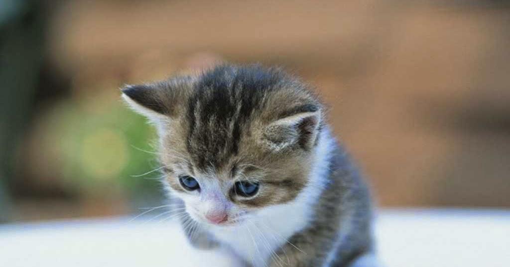 Gambar Kucing Comel Senyum Kucingcomel Com