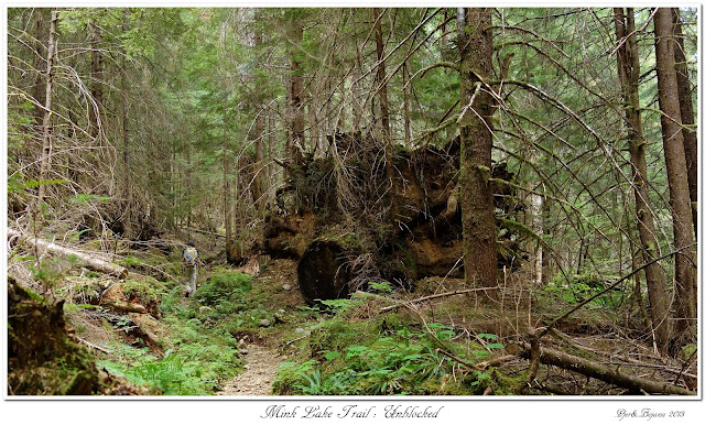 Mink Lake Trail: Unblocked