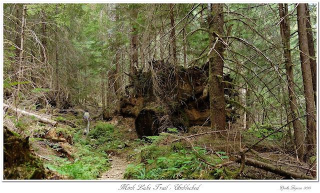 Mink Lake Trail: Unblocked