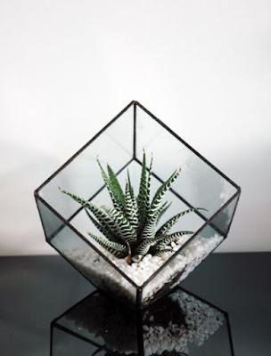 Terarium Kaca Prisma (Segi empat)