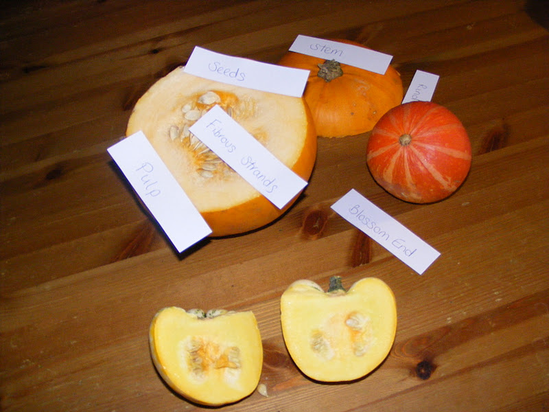 Labeling Parts of a Pumpkin (Photo from Homeschool Escapade)