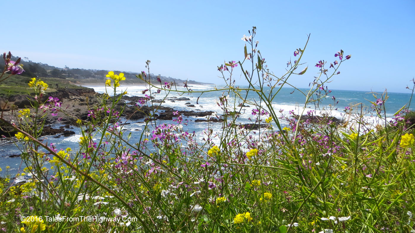 Cambria, California: the ocean, the shoreline and purple flowers.