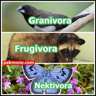 Pengertian granivora, frugivora, folivora, dan nektivora