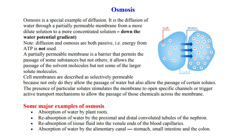 osmosis and selectively permeable membrane essay Osmosis net circulation of water through a selectively permeable membrane, owned by either a distinction in solute concentration or a mechanical force carrier-mediated transport movement of product through a cell membrane with the help of carrier proteins facilitated diffusion.