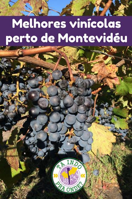 Melhores vinícolas para visitar perto de Montevidéu (Uruguai)