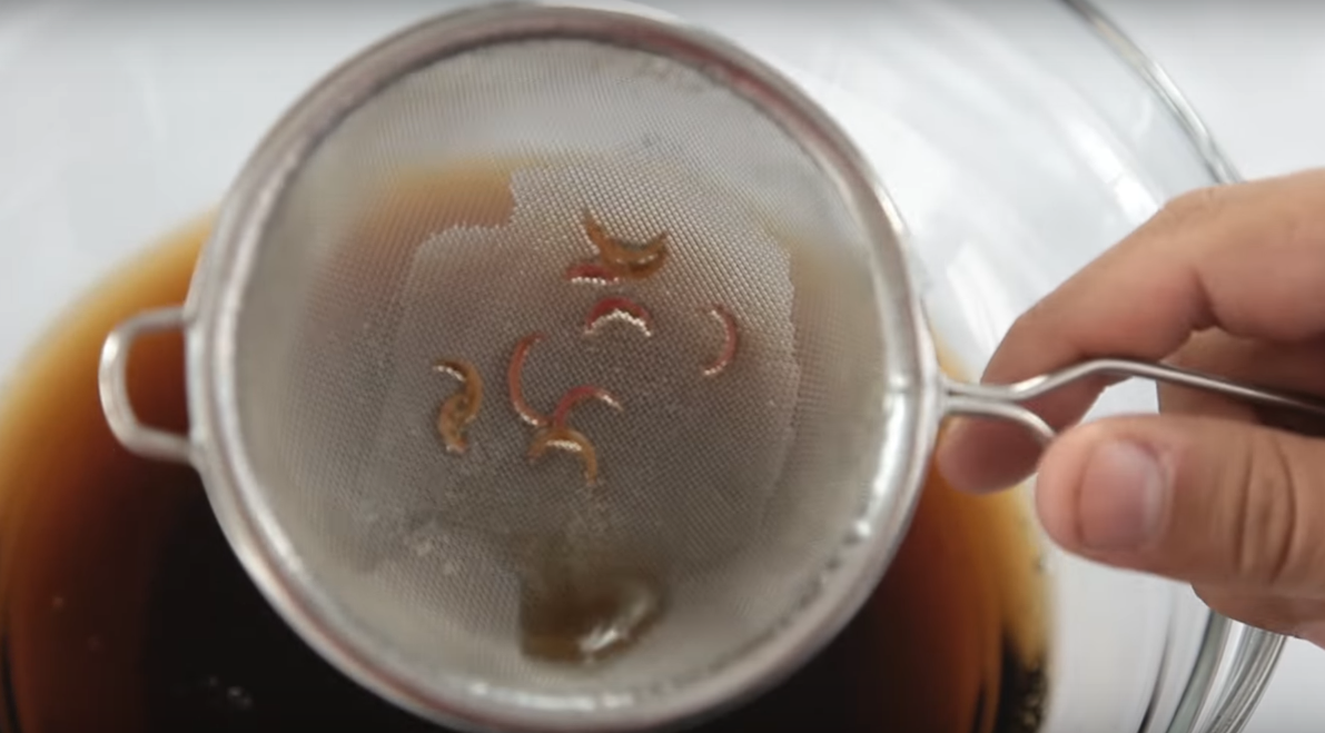 Goldfish flotando - YouTube