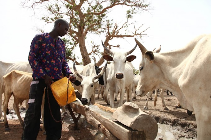 Herdsmen Was Asked To Leave Igbo Land On August 31 Quit Notice, Sacrosanct—Igbo group