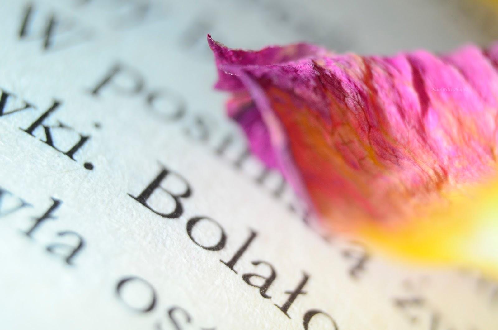 książka | papier | róża | kwiat | makro
