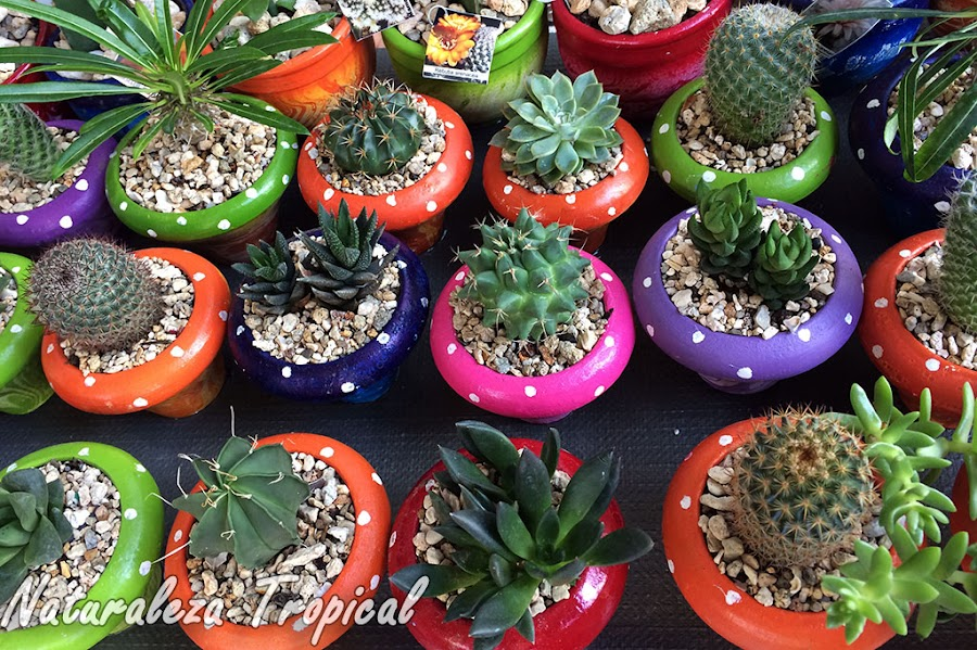 Estimula tu negocio de ventas de plantas suculentas