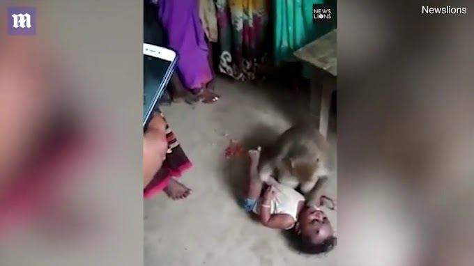 Kid abduction by a monkey and people threat