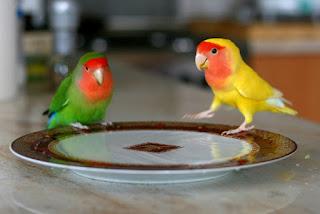 lovebird jinak