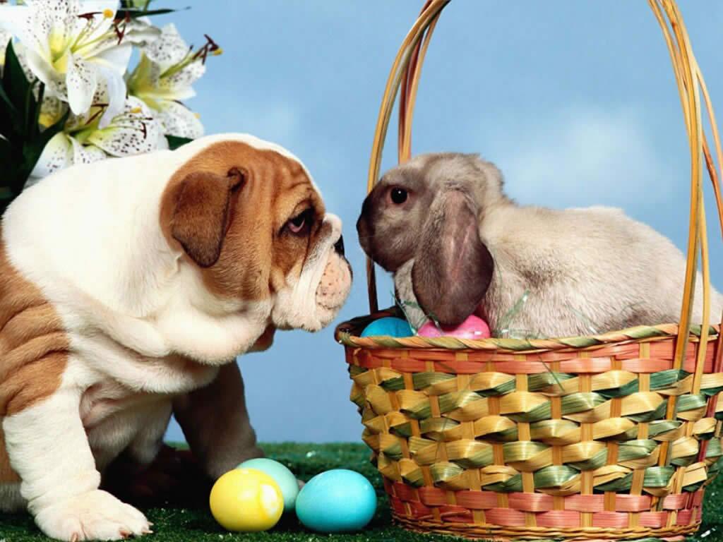 5 Most Beautiful Easter Desktop