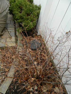Toronto Summerhill spring garden cleanup before by Paul Jung Gardening Services