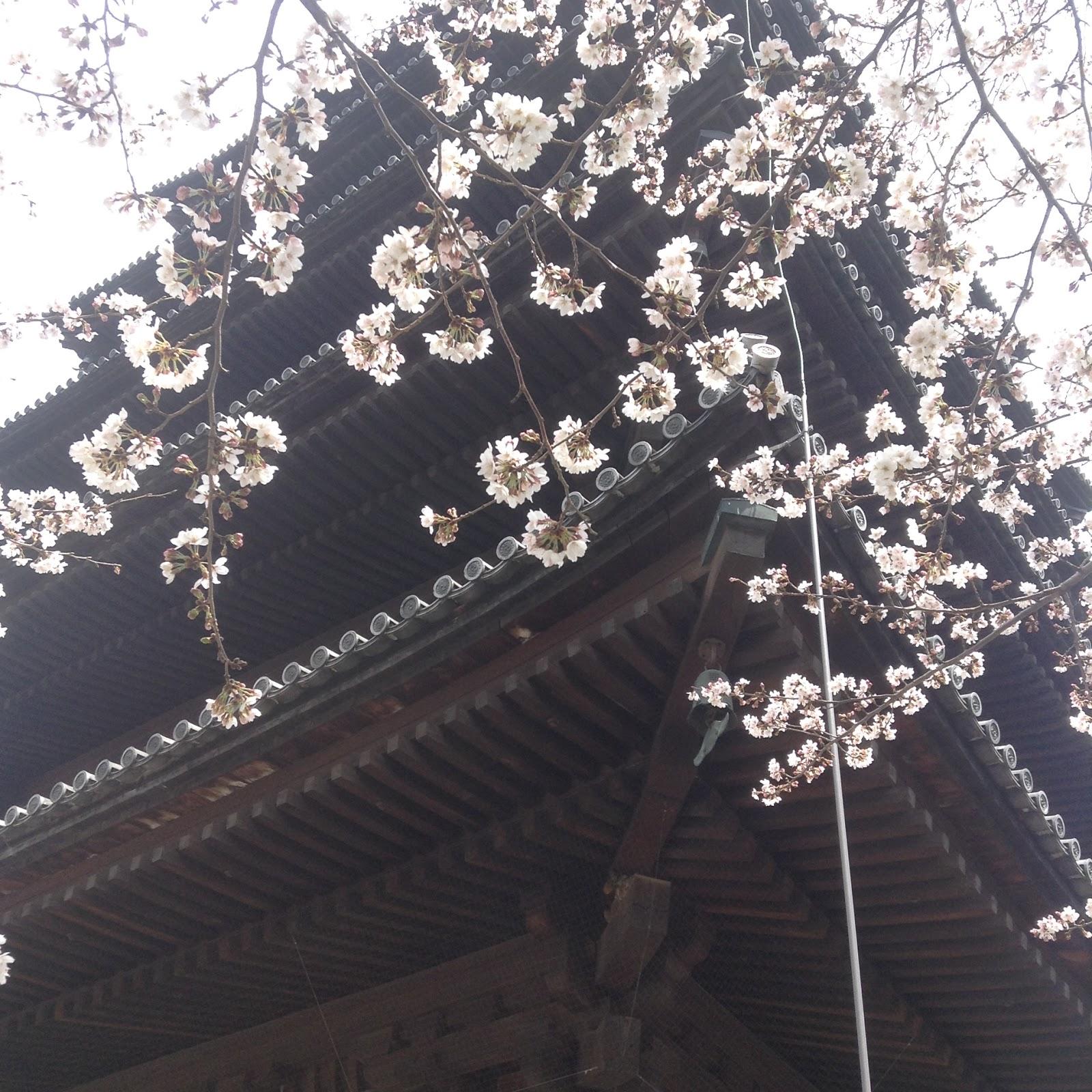 Toji Kyoto Sakura
