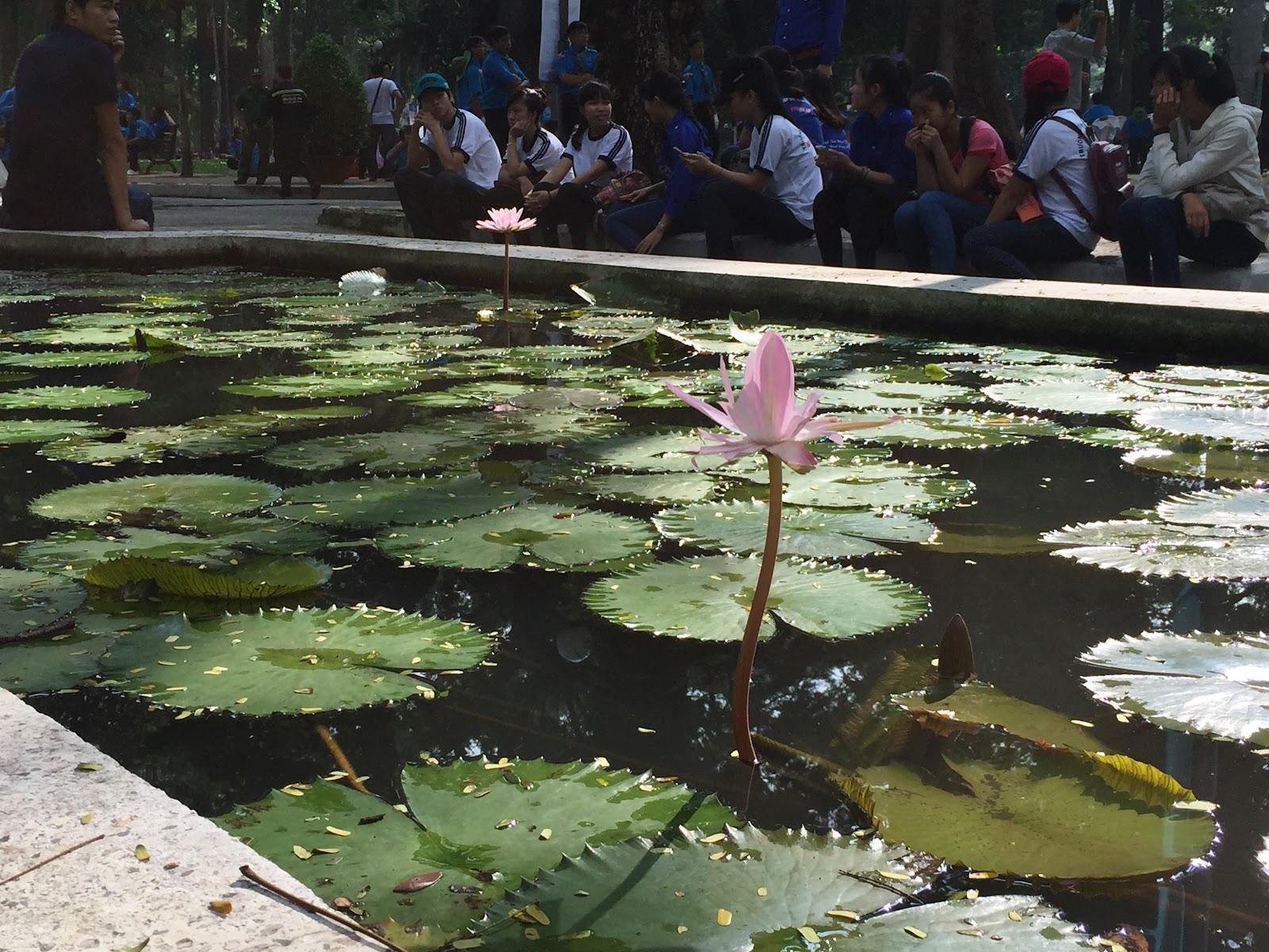 Lotus-flower-vietnam
