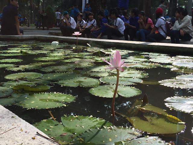 Lotus-flower-vietnam