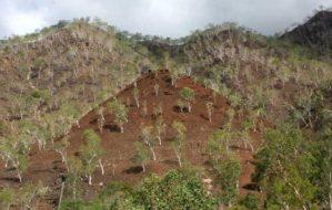 Foto Keadaan alam Timor Timur