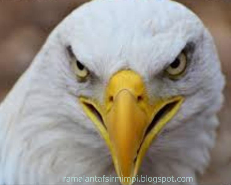 satunya burung yang sangat pintar dalam menirukan suara manusia atau suara yang didengarny 9 Arti Mimpi Mendengar Suara Burung Beo Menurut Primbon Jawa