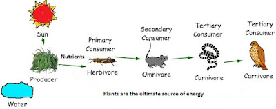 The Food Synthesised By The Plants Is Stored As