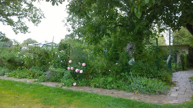 rose-weiß-farbenes Staudenbeet im Regen (c) by Joachim Wenk