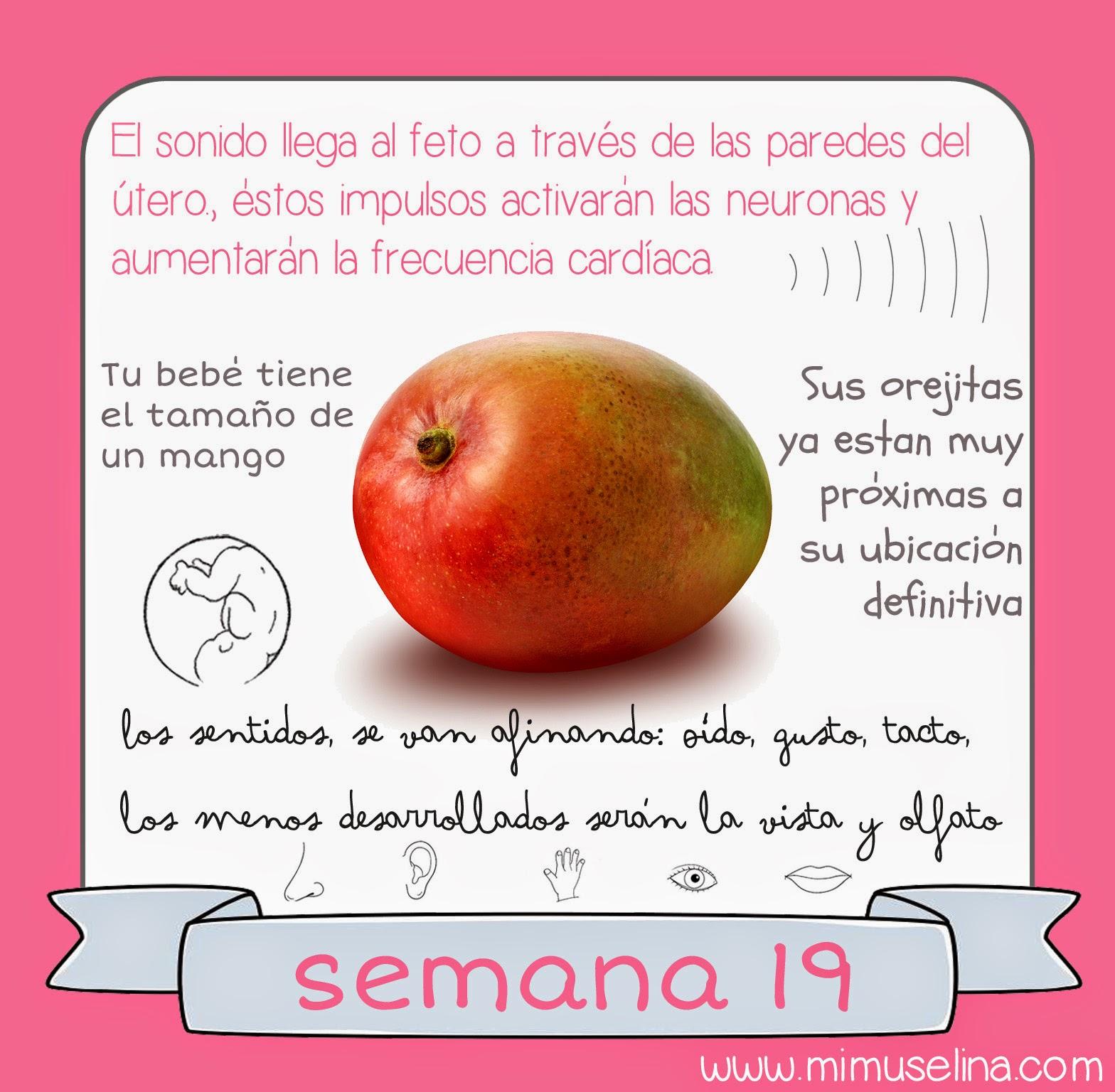 e01f678a0 BebeBlog by mimuselina  Semana 19 embarazo. Tamaño y evolución del ...