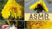 flower with fasciation
