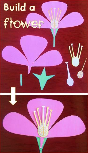 parts-of-a-flower-build-a flower-activity