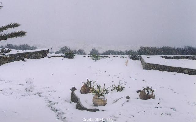 dzbany z agawą, śnieg, śnieżna sceneria, mykonos