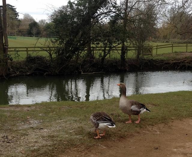 Jardín Botánico Oxford