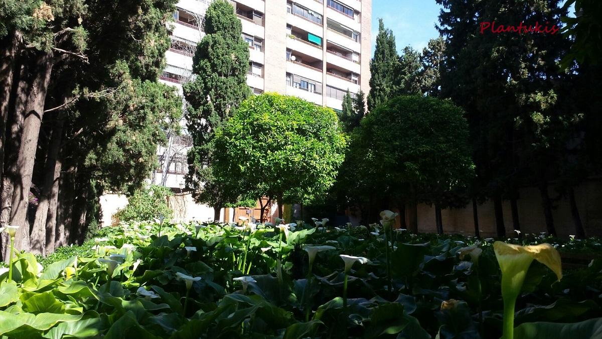 L hort de romero jardines de monforte parte ii plantukis for Jardines de monforte