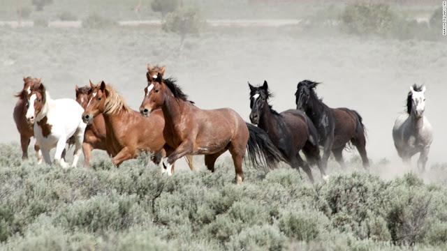 ,خيول Horses,خيول, Horses,صور خيول,احصنة,خيل عربي,الخيل الاصلي,صور