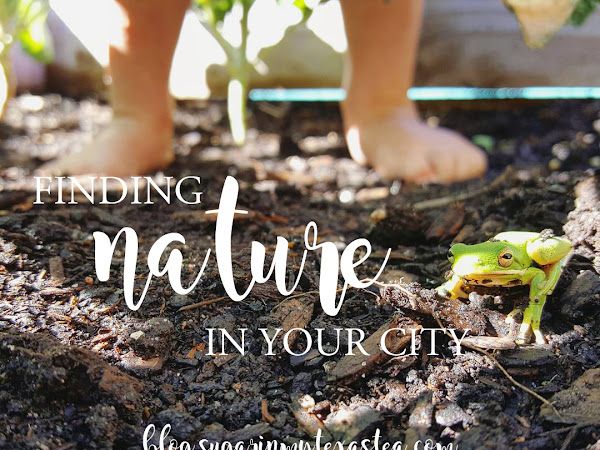 Beyond the Sidewalk: Finding Nature in Your City