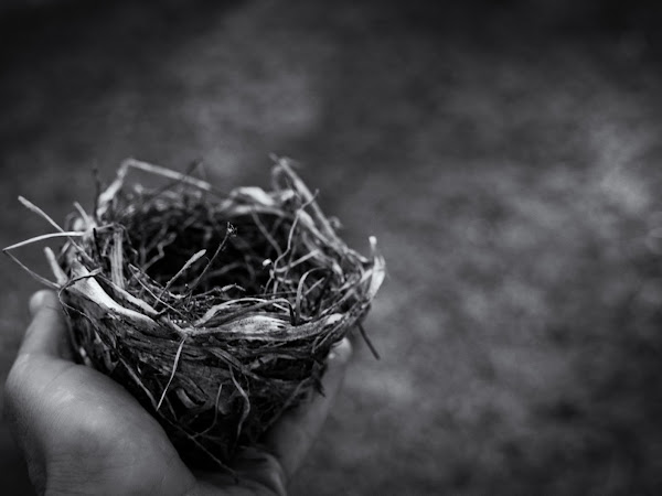 The complicated empty nest